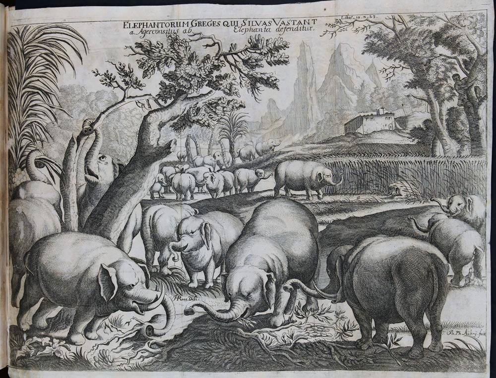 Le meravigliose avventure dei viaggiatori del passato, tra '400 e '800: la mostra alla Galleria Estense