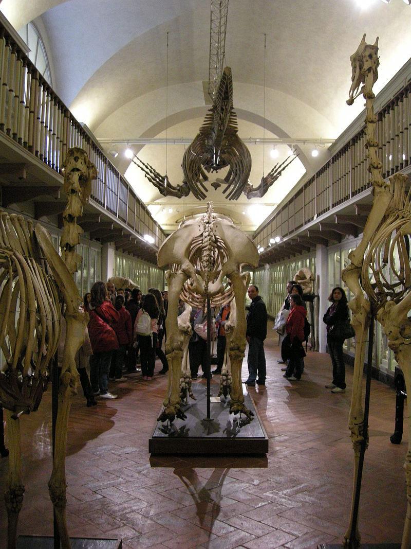 La Specola di Firenze chiude per lavori di riqualificazione. Sabato 31 agosto Arrivederci Specola