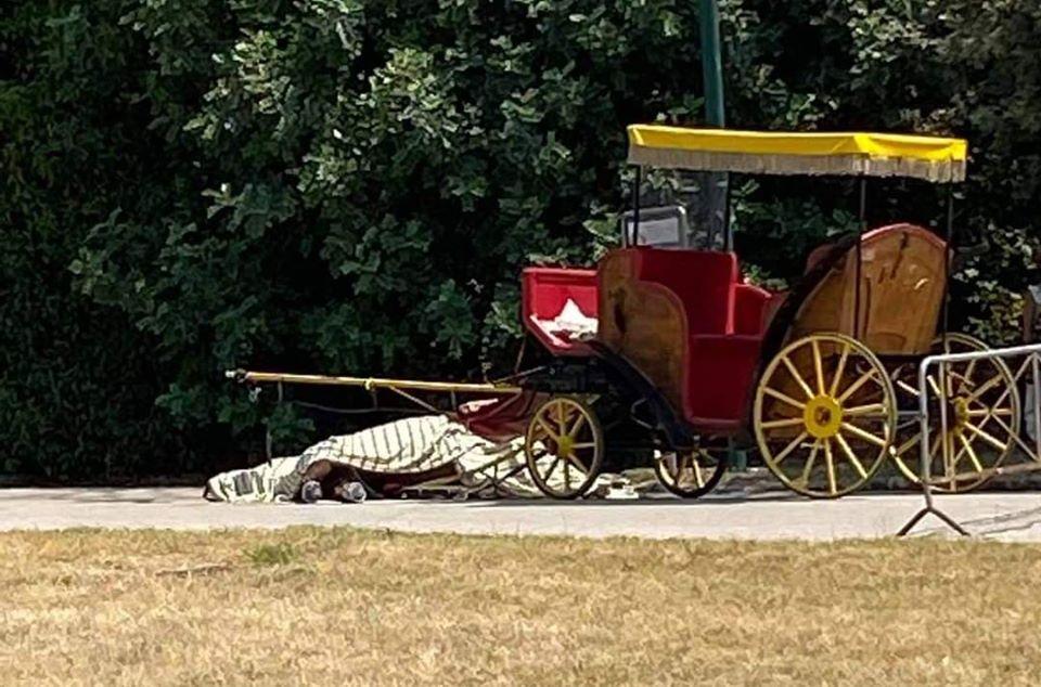 """Reggia di Caserta, muore un cavallo del trasporto calessi: """"episodio terribile"""""""