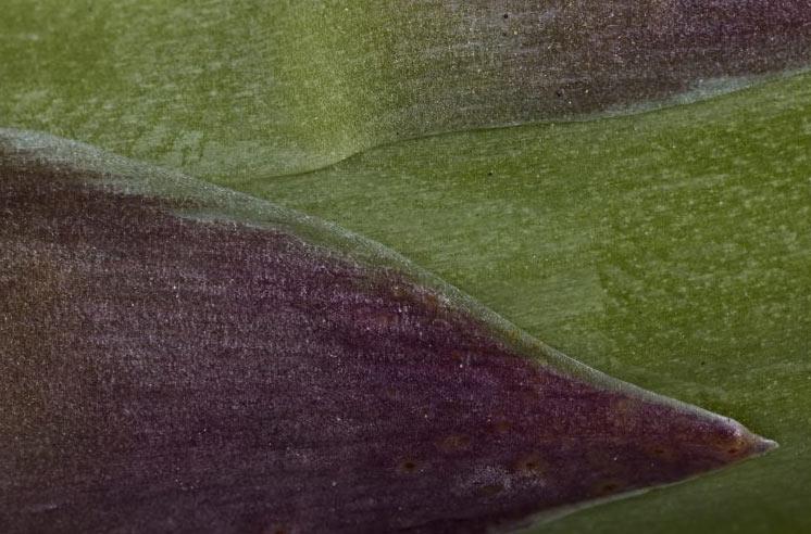I prodotti del Roero nelle foto macro di Ivano Piva: la mostra al Castello di Monticello