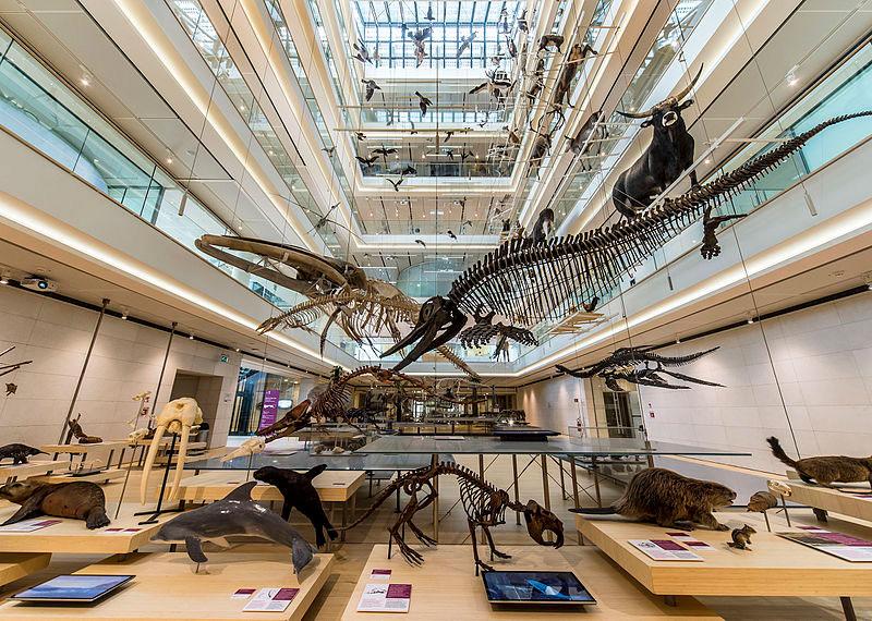 MUSE on Air e tante altre iniziative per il Museo delle Scienze di Trento