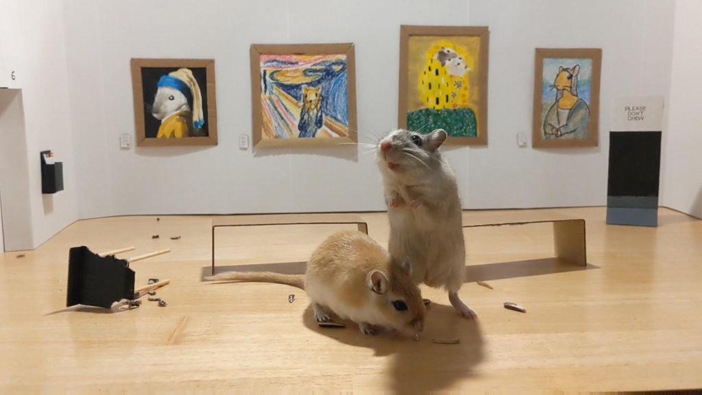 Coppia di italiani a Londra crea un museo per i gerbilli, e la trovata spopola