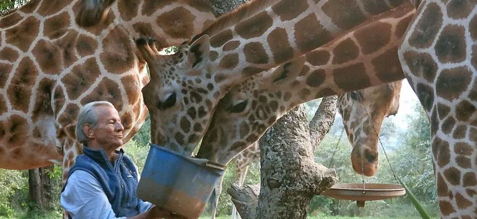 Addio al fotografo che amava l'Africa e la sua natura, Peter Beard