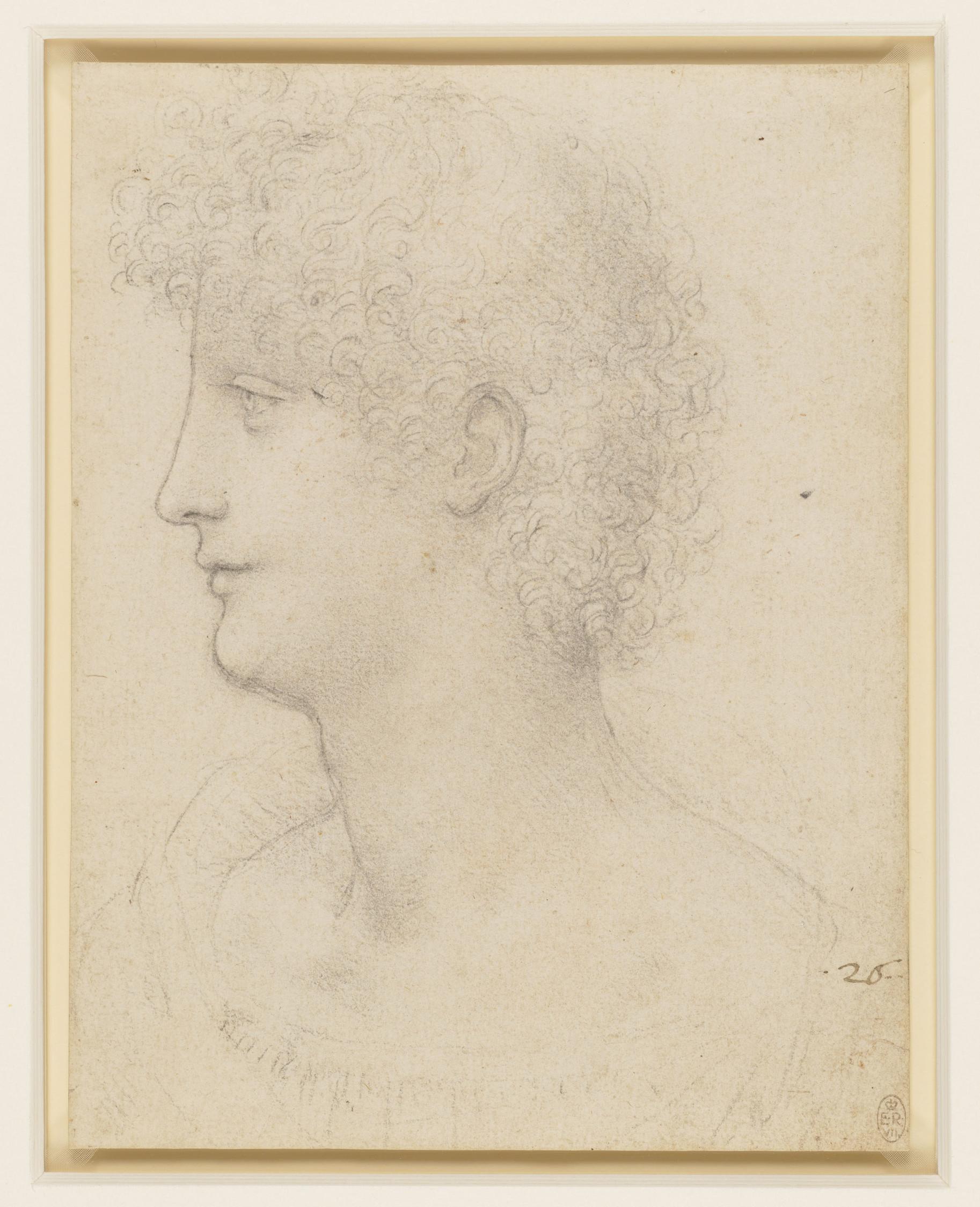 Leonardo da Vinci, Testa di giovane di profilo (1517-1518 circa; gessetto nero, 193 x 149 mm; Windsor, Royal Collection, inv. RCIN 912557)