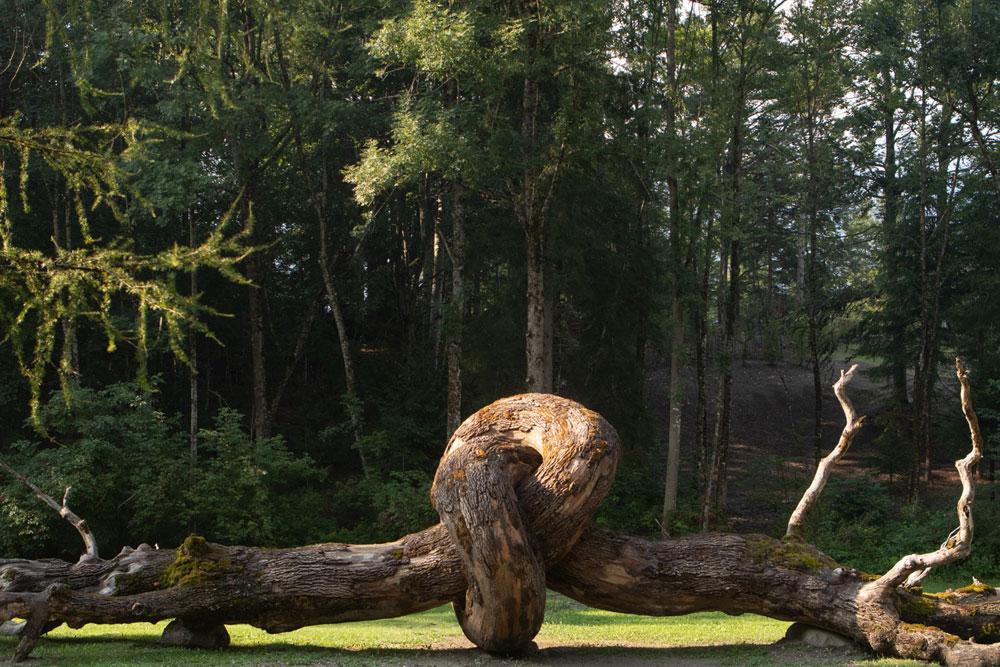 In Trentino il primo concerto green in una foresta a cui si accede adottando alberi