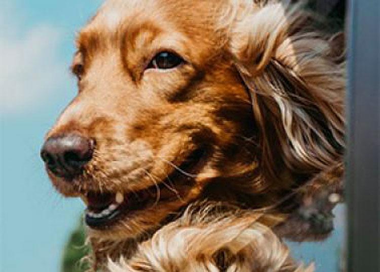 Nasce il primo festival cine-letterario tutto dedicato al cane