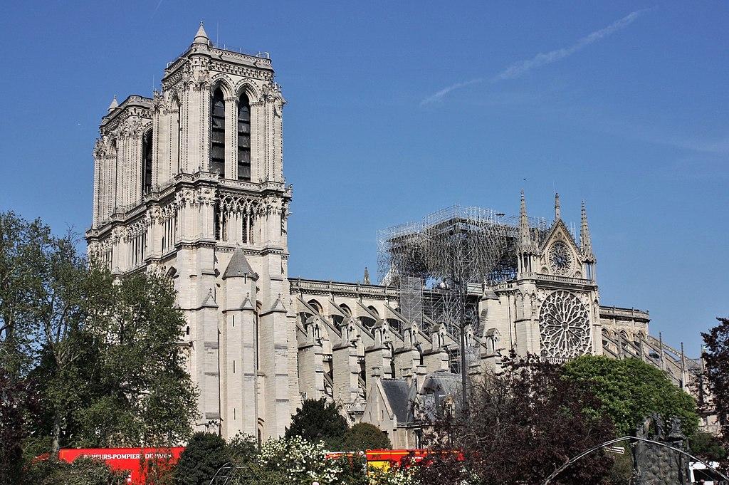 Mille querce secolari saranno abbattute per ricostruire Cattedrale di Notre-Dame: un ecocidio?