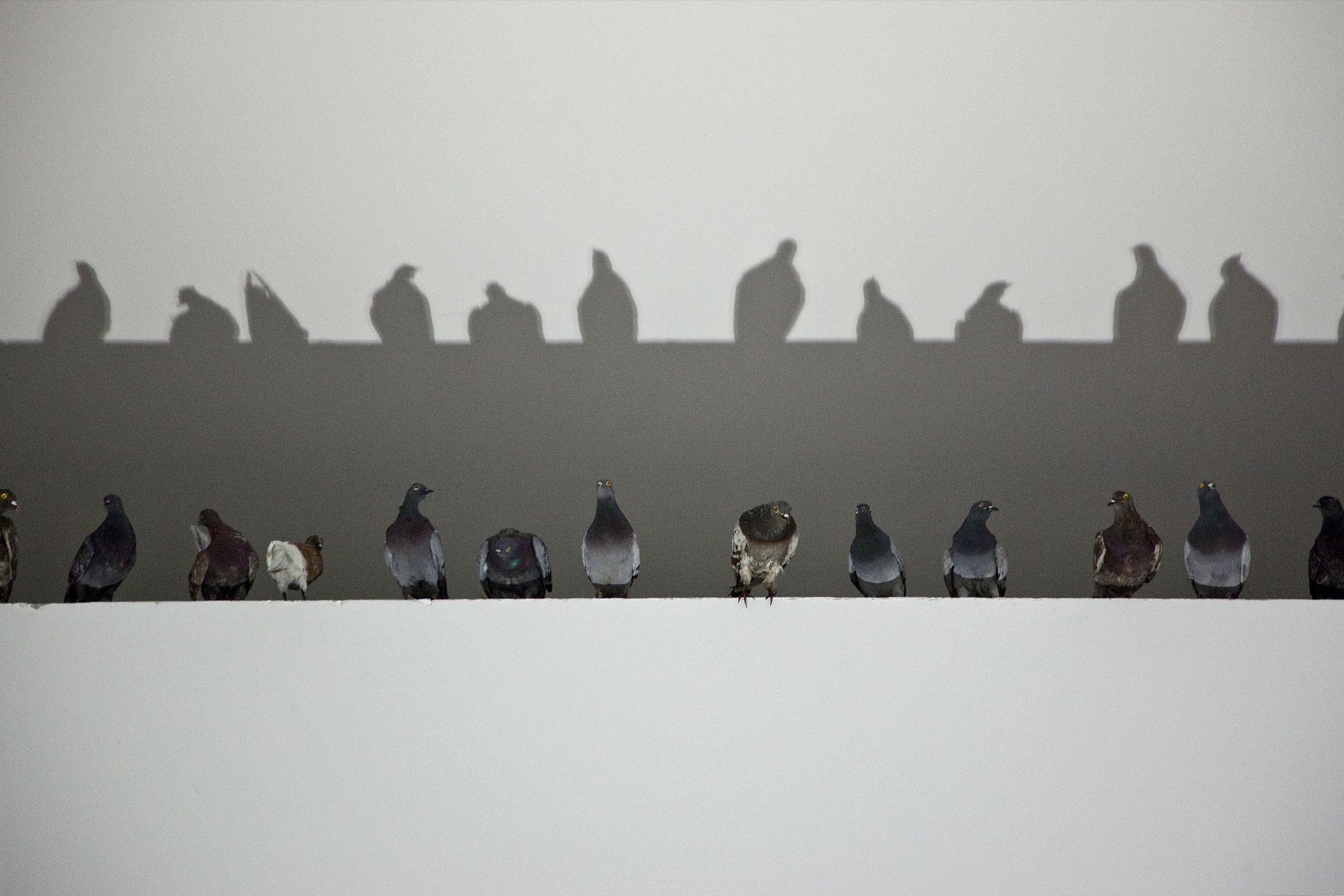 Maurizio Cattelan torna a Milano con una mostra sul ciclo della vita, con tre grandi opere nuove