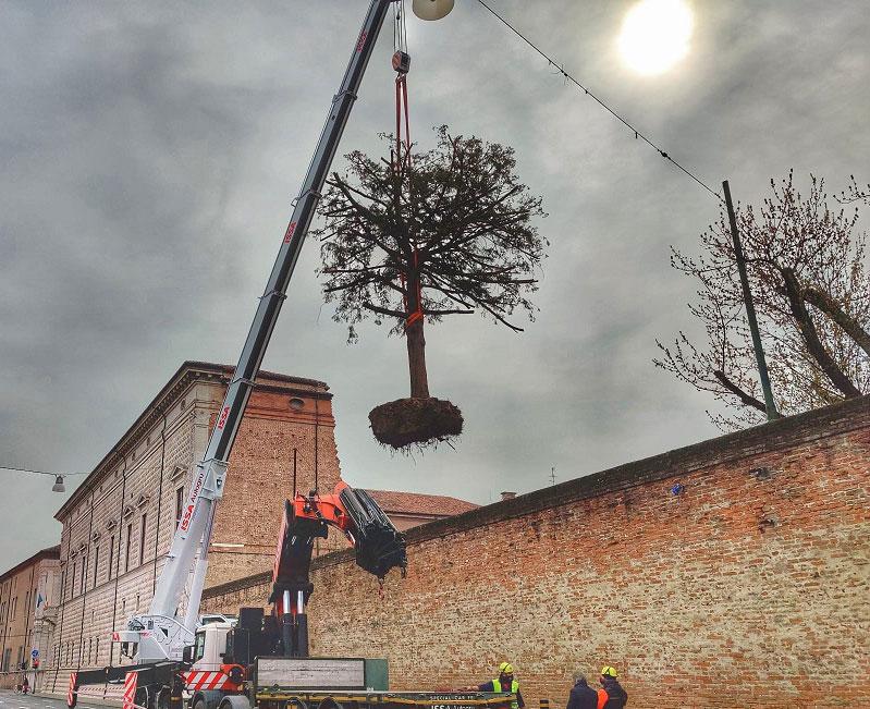 Ferrara, salvato dall'abbattimento il tasso secolare di Palazzo dei Diamanti
