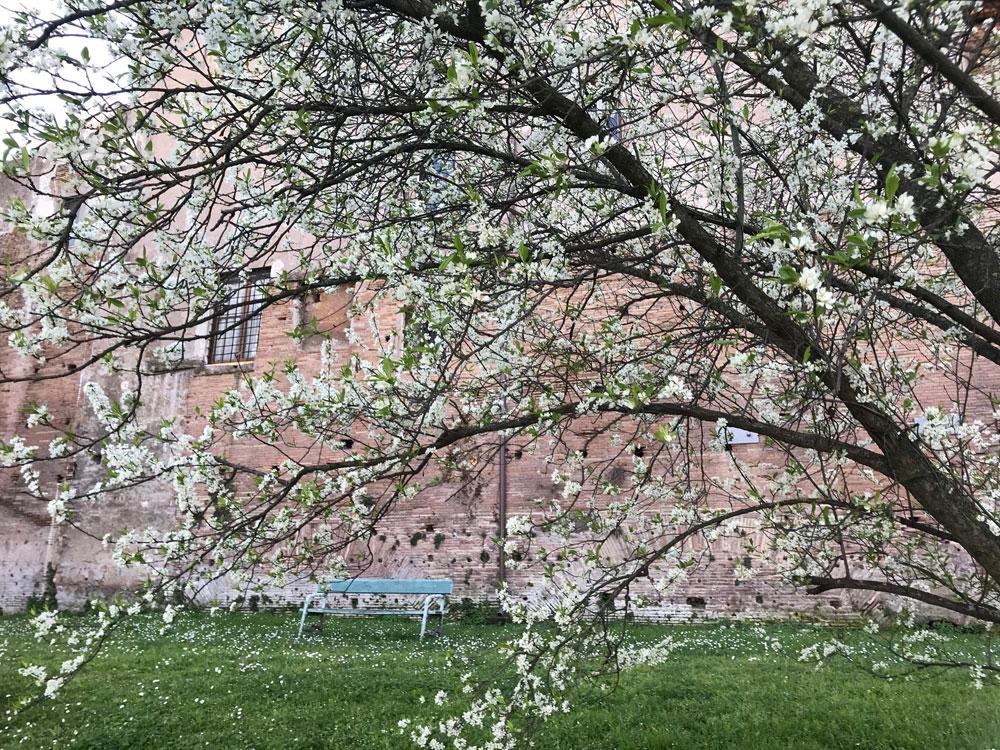 Nasce Parco Green, il lato naturale del Parco archeologico del Colosseo